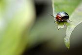 蟲蟲雜拍:DSC_1829.jpg