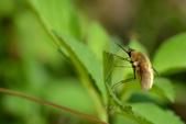 蟲蟲雜拍:DSC_6357.jpg