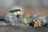 蟲蟲雜拍:DSC_0430.jpg