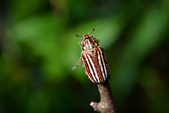 蟲蟲雜拍:DSC_1584.jpg