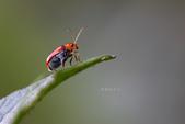 蟲蟲雜拍:IBIN2302.jpg