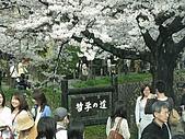 20080404日本關西櫻花滿開遊:哲學之道--我們來的時間恰到好處--是滿開唷!