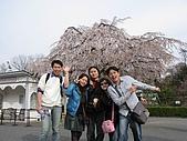 20080404日本關西櫻花滿開遊:明治村--連拍三