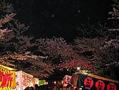 20080404日本關西櫻花滿開遊:調整大小照片 414.jpg