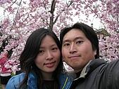 20080404日本關西櫻花滿開遊:哲學之道--沿途狂照