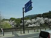 20080404日本關西櫻花滿開遊:沿途風情