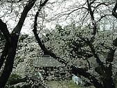 20080404日本關西櫻花滿開遊:坐上巴士沿途風情