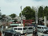 20080404日本關西櫻花滿開遊:犬山城下