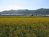 20091213新社花海+百菇莊....ㄏㄏ人比花嬌:調整大小IMG_7254.JPG