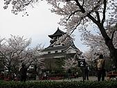 20080404日本關西櫻花滿開遊:櫻之犬山城