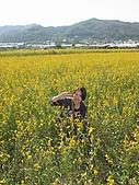 20091213新社花海+百菇莊....ㄏㄏ人比花嬌:調整大小IMG_7260.JPG