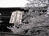 20080404日本關西櫻花滿開遊:4