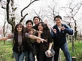 20080404日本關西櫻花滿開遊:3
