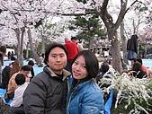 20080404日本關西櫻花滿開遊:八坂神社
