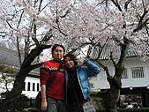 20080404日本關西櫻花滿開遊:犬山城--櫻花