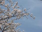 20080404日本關西櫻花滿開遊:前往嵐山--搭小火車沿途風情