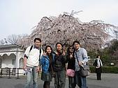 20080404日本關西櫻花滿開遊:明治村--連拍一