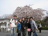 20080404日本關西櫻花滿開遊:明治村--連拍二