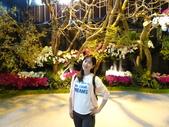 大台南new:2019台灣國際蘭展