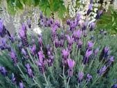 足利紫藤花園:IMG20190511184447.jpg