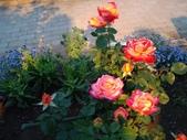 足利紫藤花園:IMG20190511184346.jpg