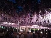 足利紫藤花園:IMG20190511190600.jpg
