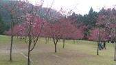 sakura:IMAG0763.jpg