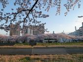 茨城櫻花:P1070772.JPG