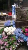 東京紫陽花:IMAG1456.jpg