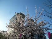 茨城櫻花:P1070756.JPG