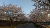 茨城櫻花:IMAG2398.jpg