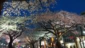 茨城櫻花:IMAG2498.jpg