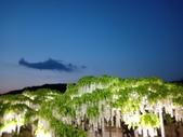 足利紫藤花園:IMG20190511190402.jpg
