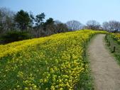 茨城櫻花:P1070811.JPG