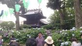 東京紫陽花:IMAG1465.jpg