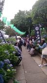 東京紫陽花:IMAG1458.jpg