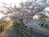 茨城櫻花:P1070768.JPG