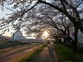 茨城櫻花:P1070771.JPG