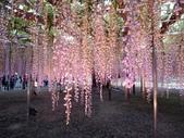足利紫藤花園:IMG20190511182026.jpg