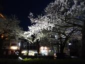 茨城櫻花:P1070842.JPG