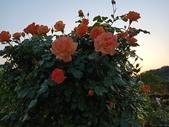 足利紫藤花園:IMG20190511183900.jpg
