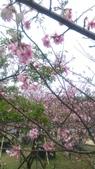 sakura:IMAG0781.jpg