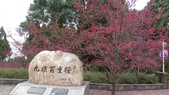 sakura:IMAG0739.jpg