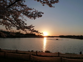 茨城櫻花:P1070779.JPG