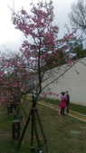 sakura:IMAG0769.jpg