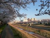 茨城櫻花:P1070773.JPG