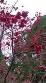 sakura:IMAG0740.jpg