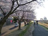 茨城櫻花:P1070762.JPG