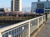 茨城櫻花:P1070767.JPG
