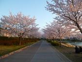 茨城櫻花:P1070778.JPG